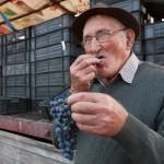 ぶどうを食べる老人