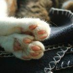 cat-1062584_640