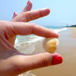 beach-544621_640