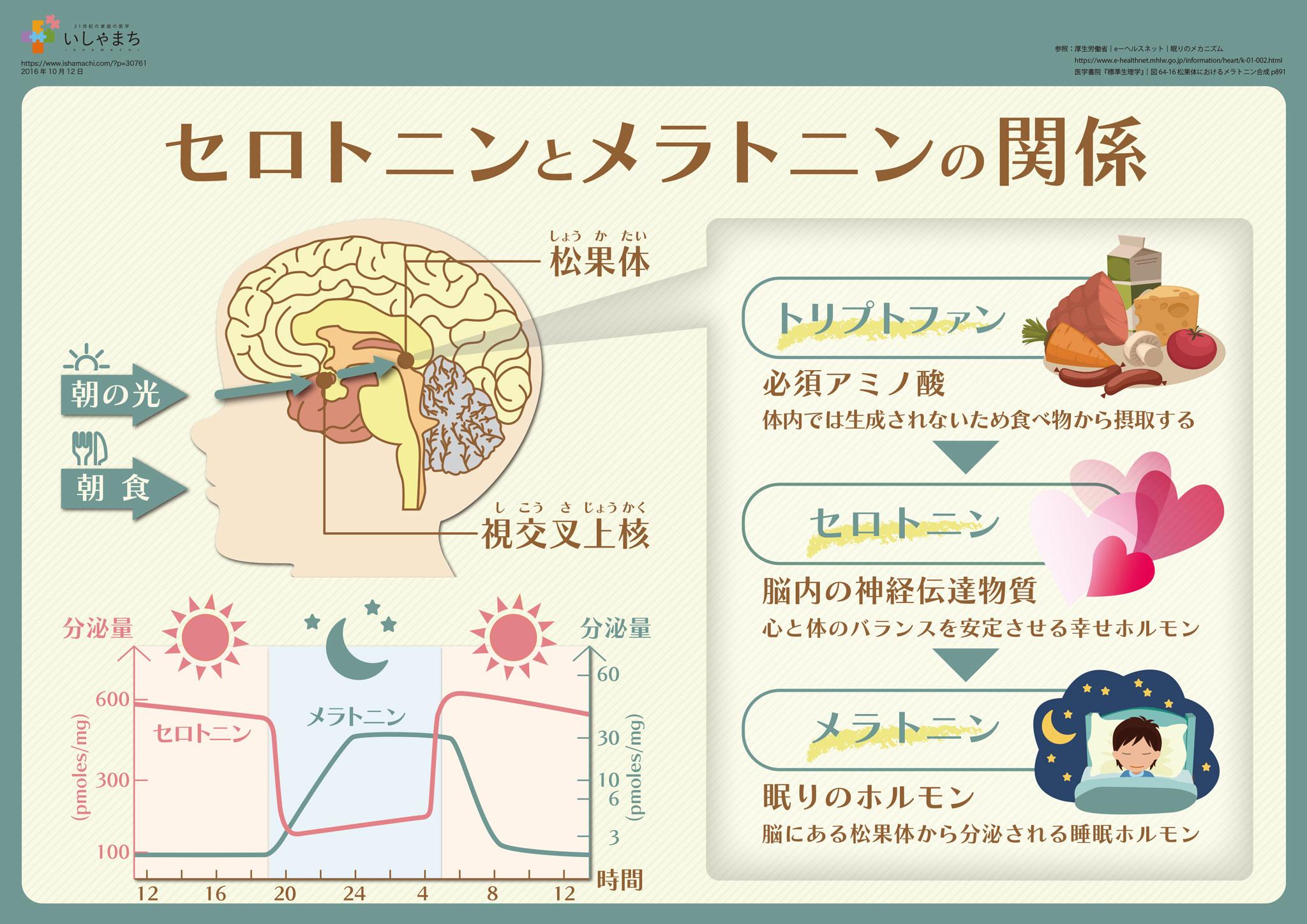 睡眠ホルモン セロトニンとメラトニンの関係