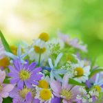 flower arranment with chamomile