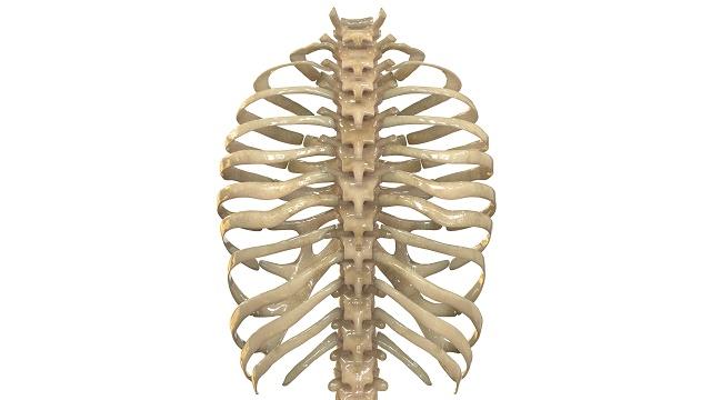 右 肋骨 下 押す と 痛い
